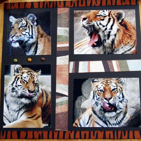 Tiger Tongues