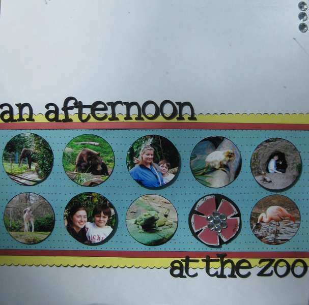 An afternoon at the zoo