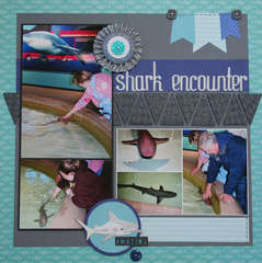 Shark Encounter