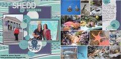Shedd Aquarium 2014