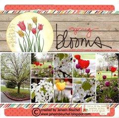 Spring Blooms
