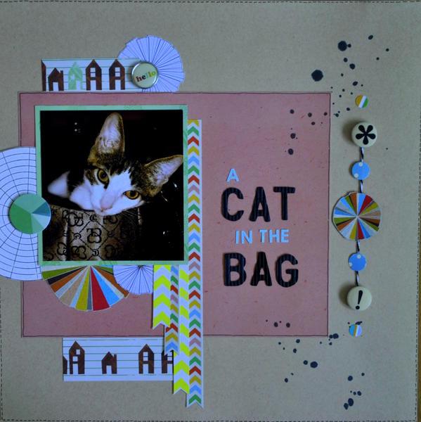 A Cat in the Bag