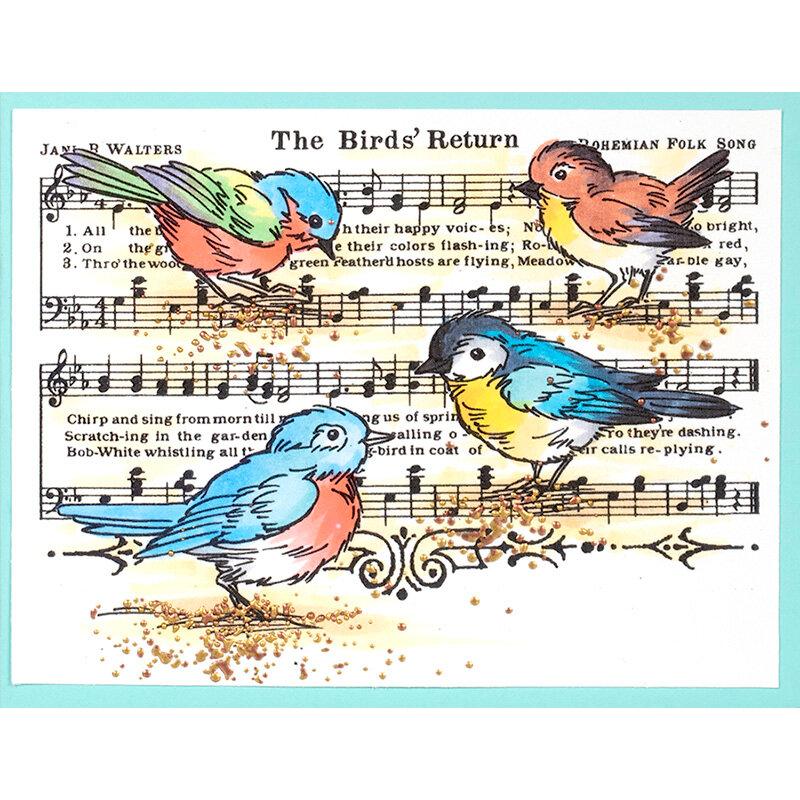 Birds Return Card