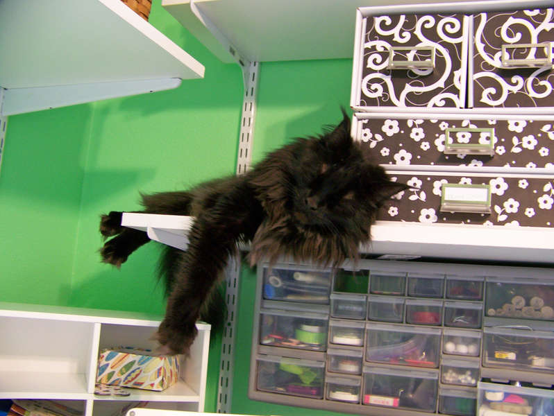 Kitty Cat Chilling in the Scraproom