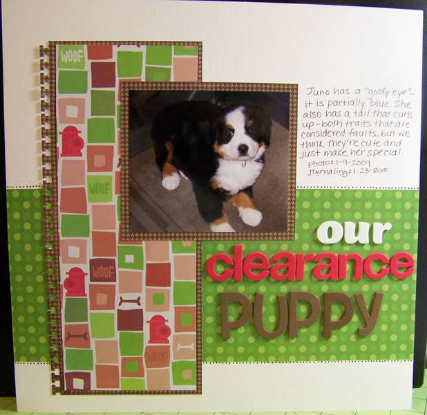 Our Clearance Puppy
