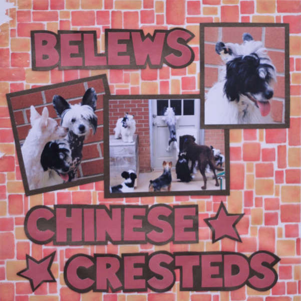 Belews Chinese Cresteds
