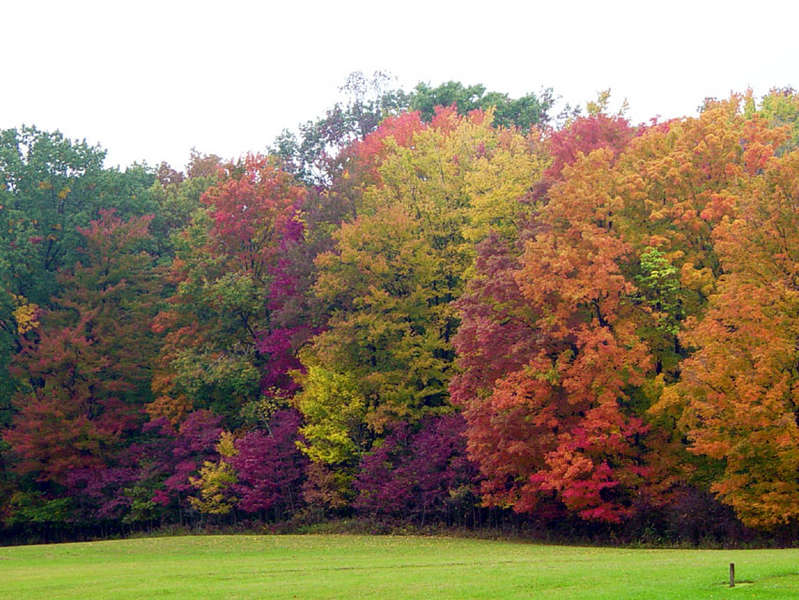 Fall Foilage in Central Ohio