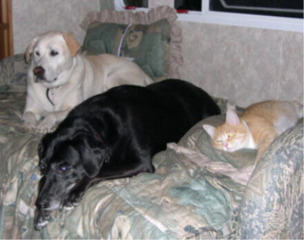 dogs and kitty