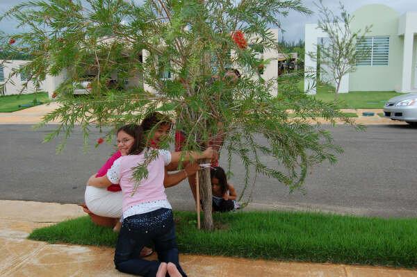Saving a Tree