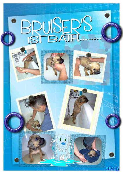 Bruiser's 1st Bath