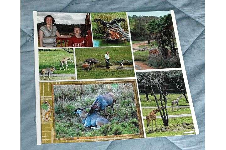 Disney Vacation:  Animal Kingdom Lodge
