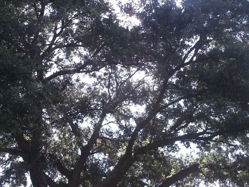 Sunlit tree in summer/mini challenge #1