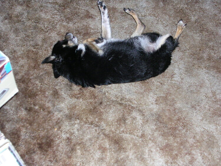 Hefe rolling around after his bath
