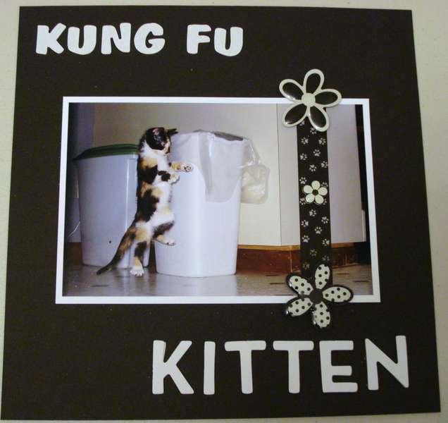 Kung Fu Kitten
