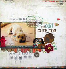 Cute (But Odd) Dog