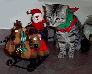 Santa Paws little helper