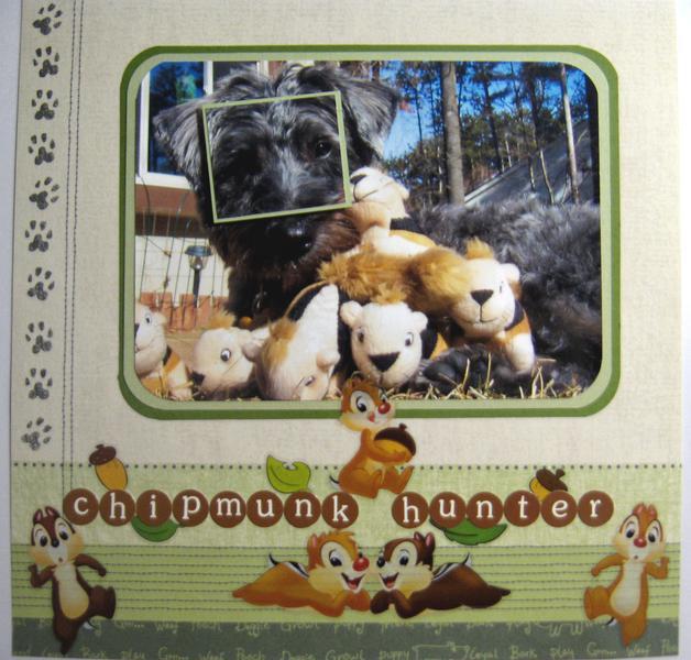 Chipmunk hunter