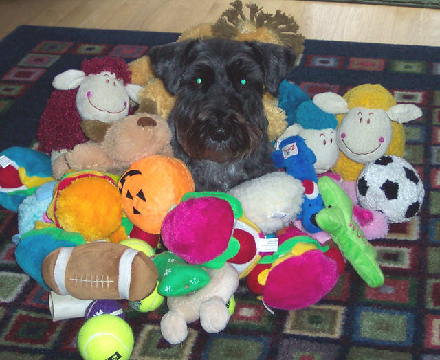 You can never have enough toys!