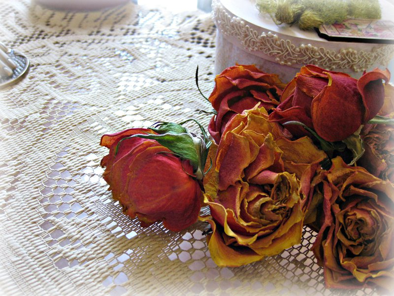 Pod 8 ~ dried roses