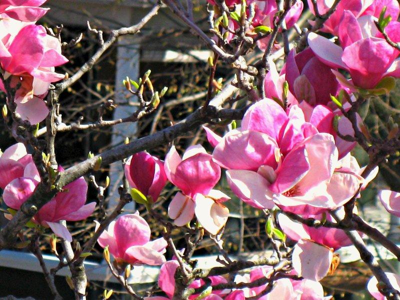 pod 9 ~ flowering