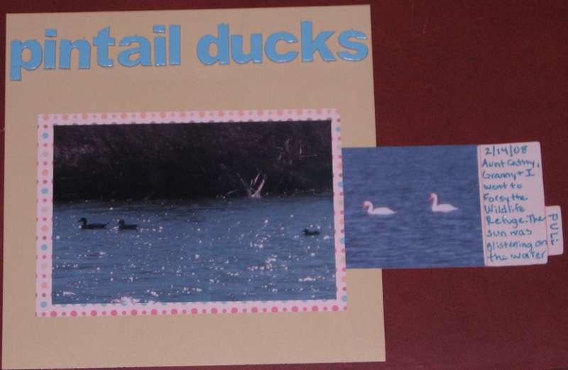 Pintail Ducks-Hidden Photo/Journaling