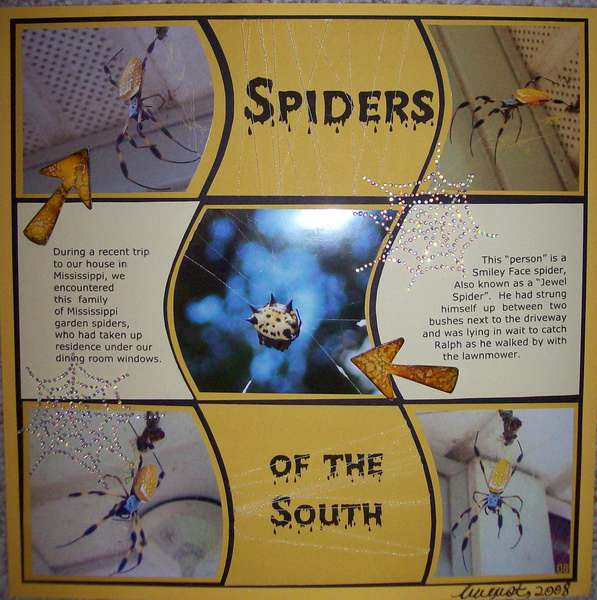 Spiders of the South