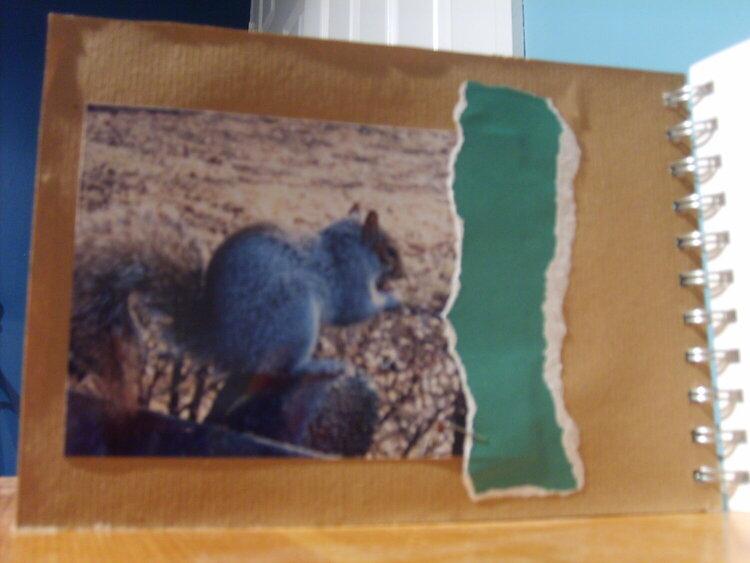 Squirrels (pg1)