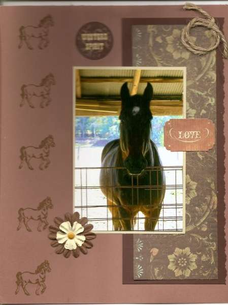 What a horse!  Lucas 2009