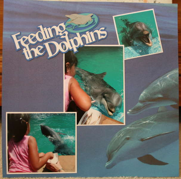 Feeind the Dolphins