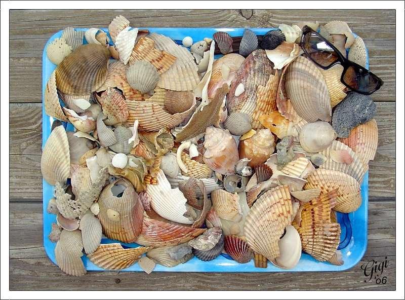 Destin Shells