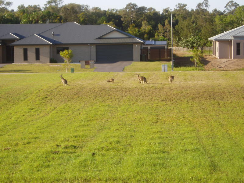 roos from back window