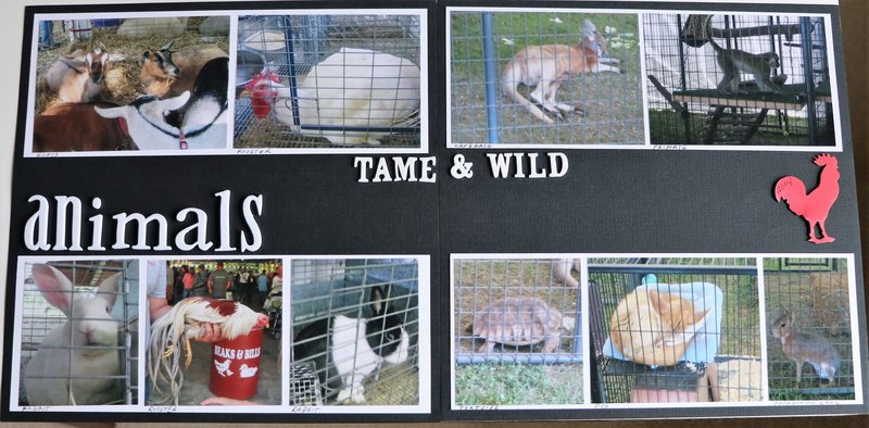 animals tame and wild