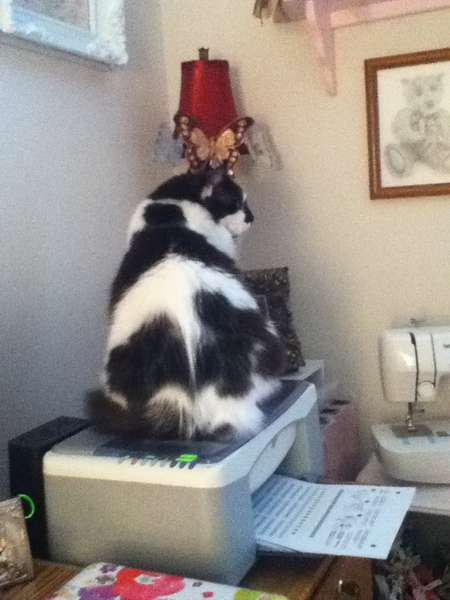 Does this printer make my butt look big??