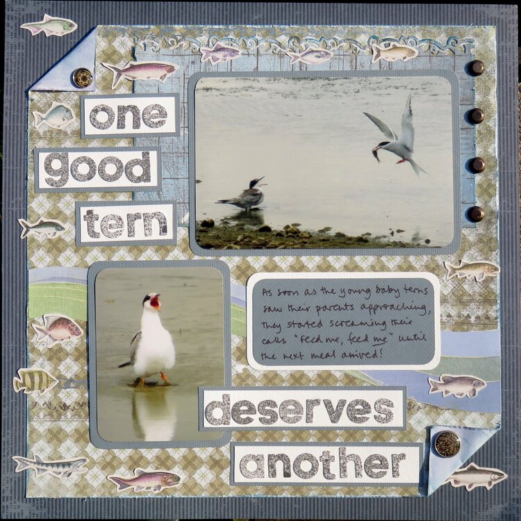 One good tern deserves another