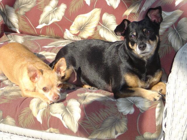 Max & Taffy