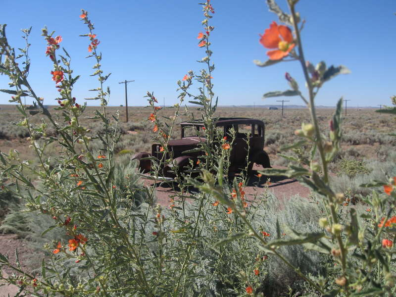 POD 08/16/08 Painted Desert.