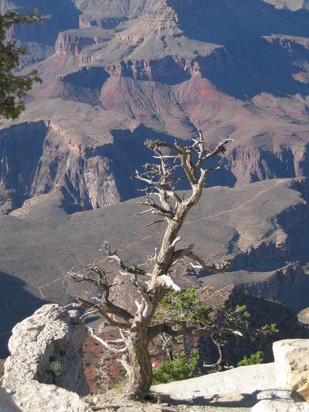POD 08/20/08 Grand Canyon