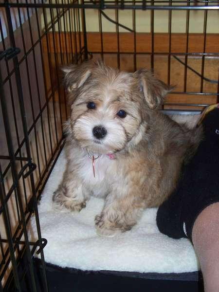 My new baby...Tori!