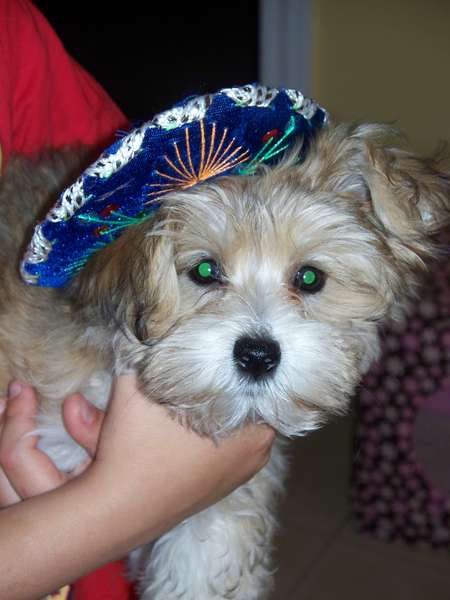 Happy Belated Cinco de Mayo!