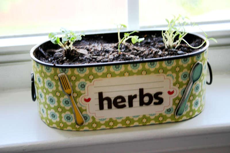 Herb Garden Container Cosmo Early Bird