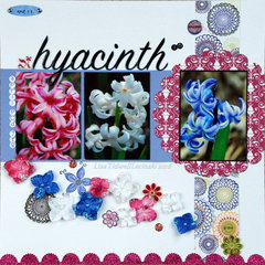 hyacinth in bloom