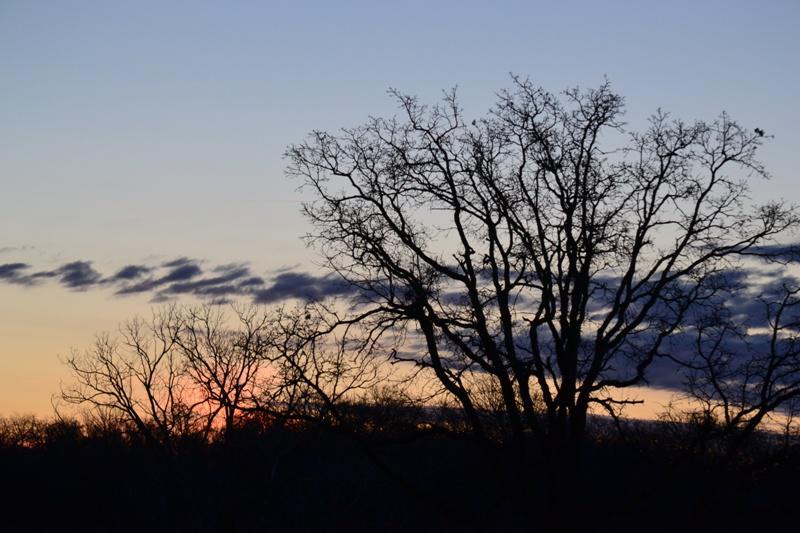 Sunrise Series - Week 10