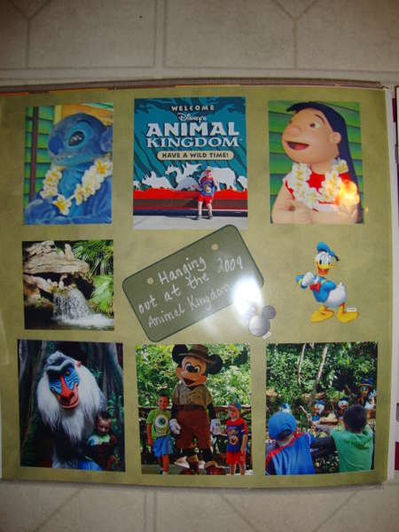 Animal Kingdom #1