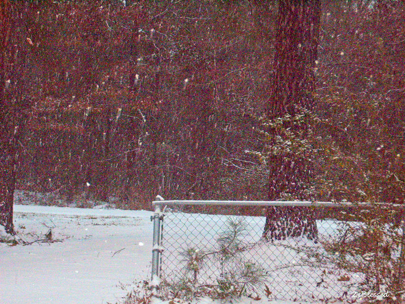 Jan. 2014 POD #7 It's Snowing Again!