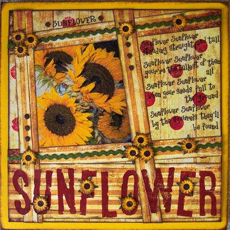 Sunflower, sunflower