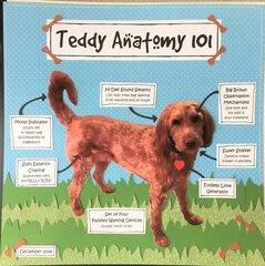 Teddy Anatomy 101