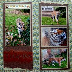 Tigers - Maharajah Jungle Trek Disneys Animal Kingdom