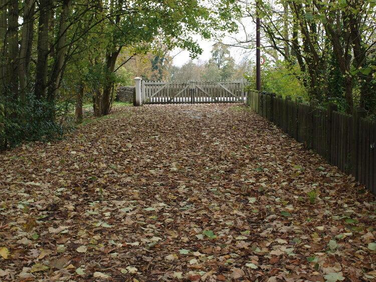 POD Nov 1 Leaves