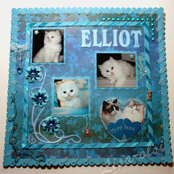 Elliot, Ragdoll in blue
