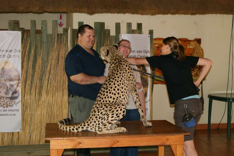 Byron the Cheetah, loving Claude